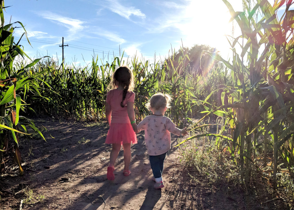 Two small girls, sisters, holding hands and walking through a corn maze, away from the camera